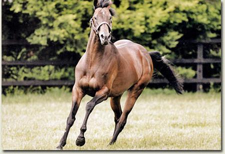 montjeu-stallion