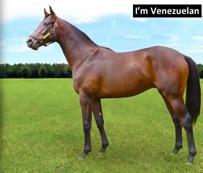 Im Venezuelan