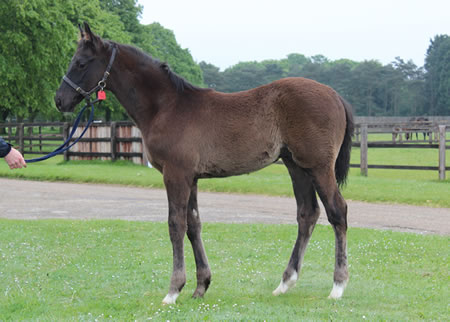 Dick Turpin - Molly Pitcher Colt resize