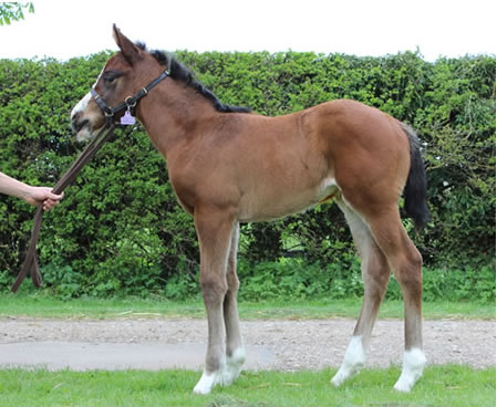 Dick Turpin - Velvet Band Filly resized 2