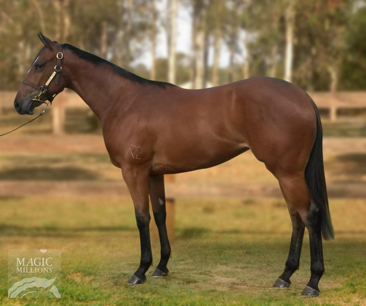 Dr Doute's - Missy Memoirs filly MM