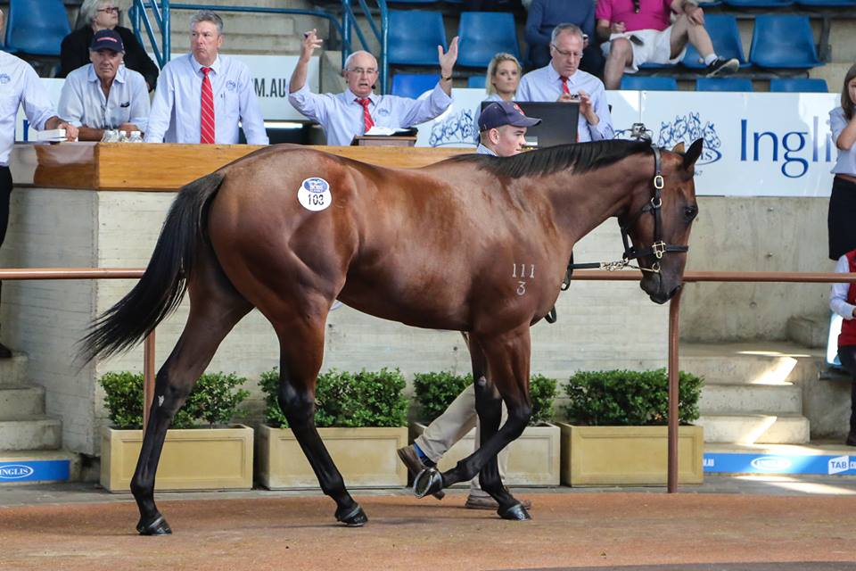 Fastnet Perfect Persuasion filly