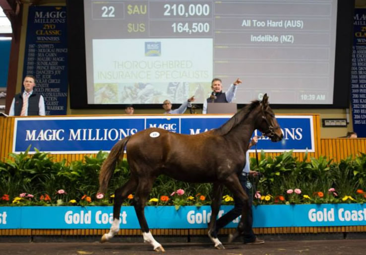 ATH Indelible colt Lot 22 resize