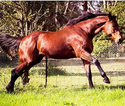 rhinebeck gallop