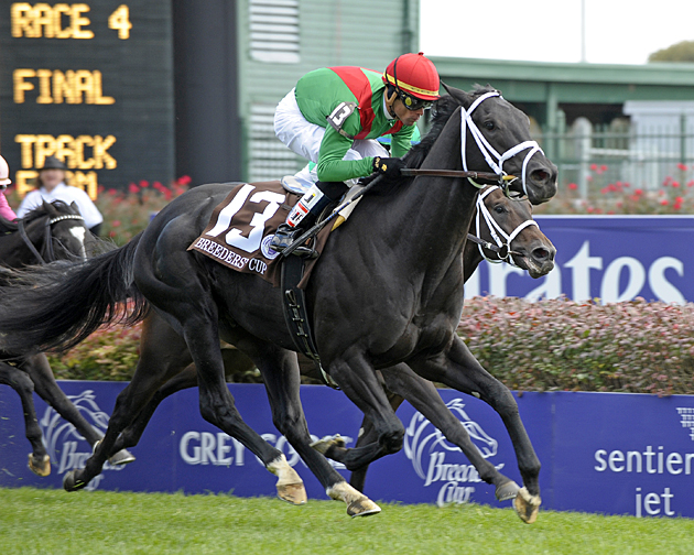 Caption: Pluck with Garrett Gomez wins the Breeders' Cup Juvenile Turf at Churchill Downs on Nov.6, 2010, in Lexington, KY. JuvTurfOrigs2 image540 Photo by Anne M. Eberhardt