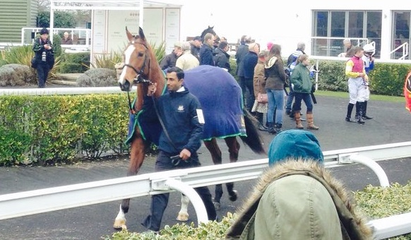 BOATERHelmet filly parades at Kempton before her winning debut on Saturday