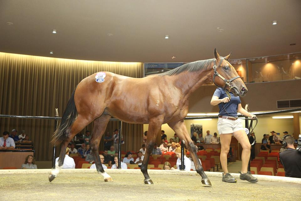 Casino Prince - Sophie's Spirit colt Lot 358