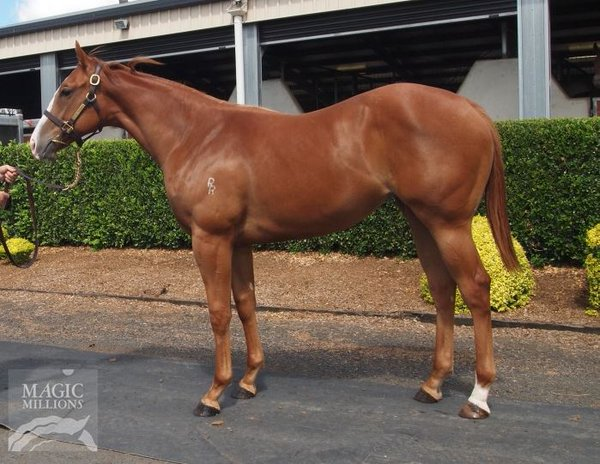 MOSSMAN - THE SPEAR FILLY