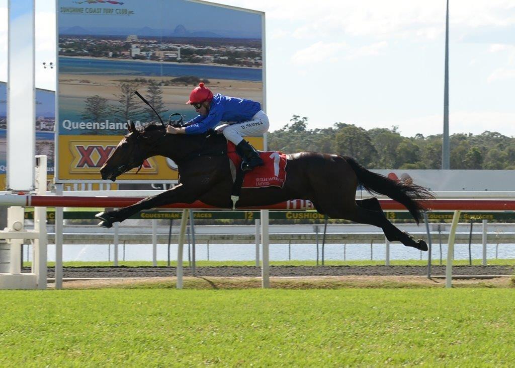 RENEGEDFlying Mossman colt wins at Sunshine Coast
