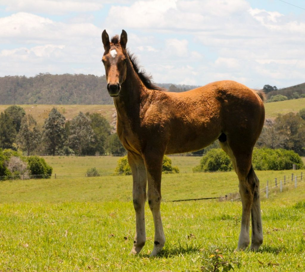 INTO ORBITSpendthrift colt pictured as a foal in September 2013