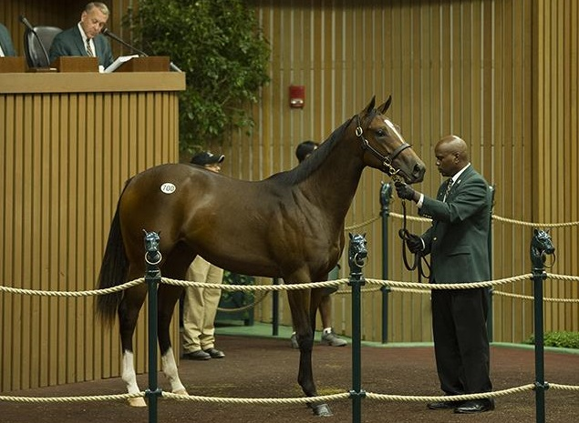 KEENELAND LEADERJimmy Creed filly sells for $385,000 at Keeneland
