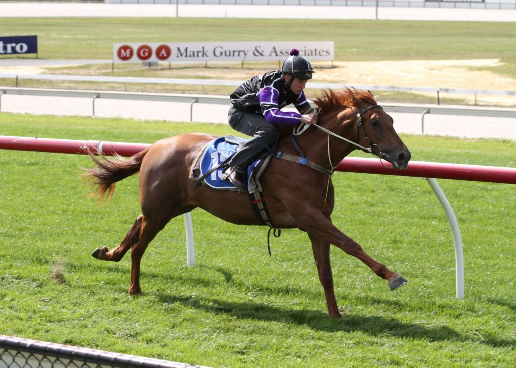 Americain – Zadiamond colt breezes at Cranbourne