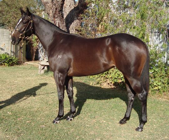 SPIRITUAL GIRLGreta West bred filly pictured prior to the VOBIS Gold yearling sale