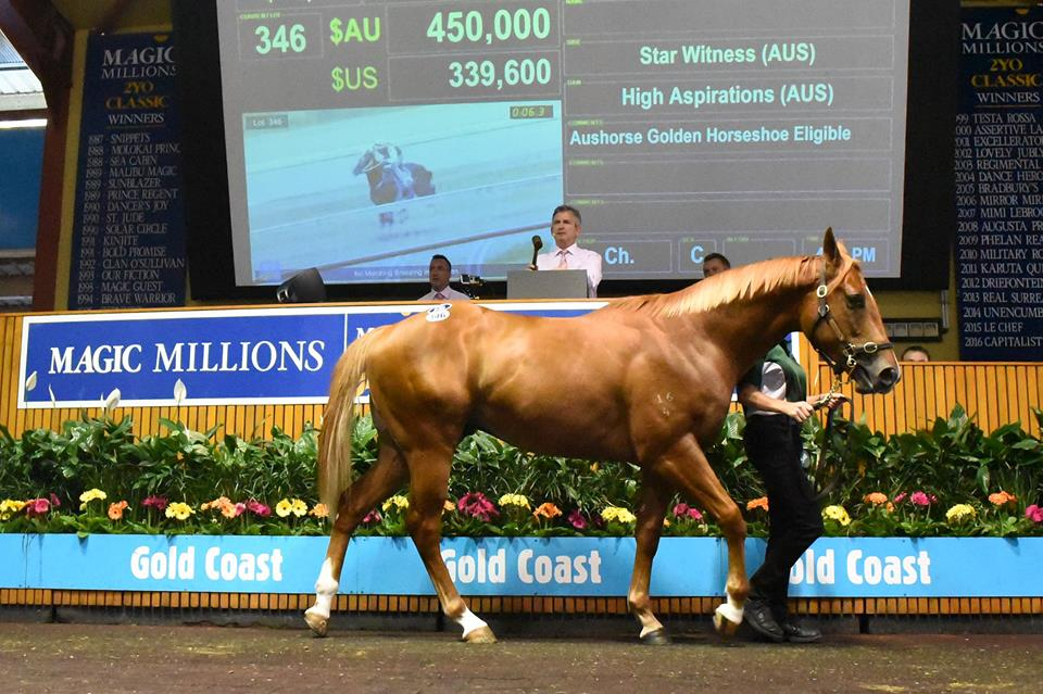 HIT SALE STARBryan Guy paid $450,000 for this colt by Star Witness
